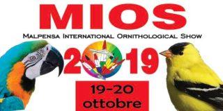 Mios 2019