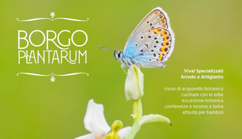 BP2020 WEB Provincia Italica