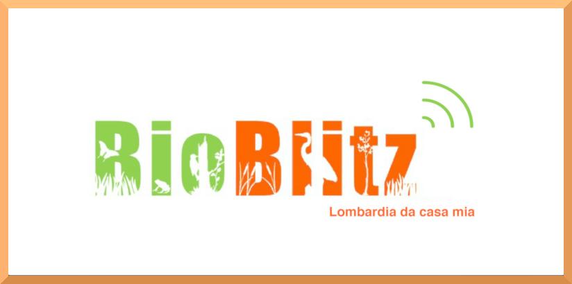 Screenshot 2020 04 30 Bioblitz Lombardia da casa mia Parco del Mincio1 Eventi, serate..robe