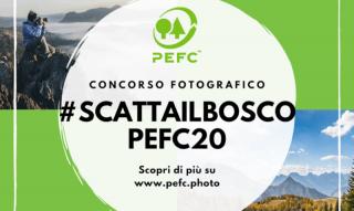 #alberi #scattailboscoPEFC20