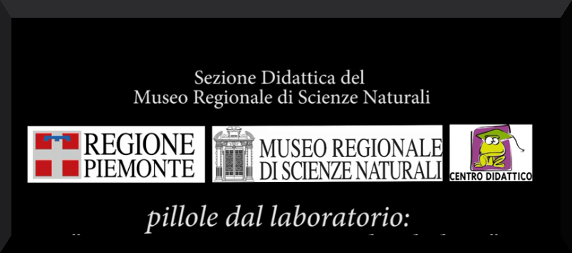 Screenshot 2021 04 21 Scienza e natura in pillole iorestoacasa1 EDUCA il festival dell'educazione